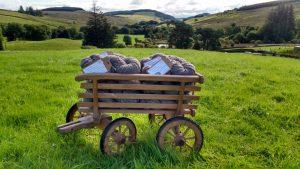 coloured ryeland wool from Scotland