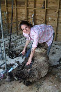 nicole shearing