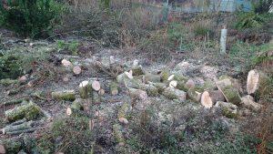 into freshly cut logs