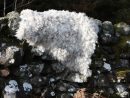 Felted Fleece Rugs at Auchenstroan