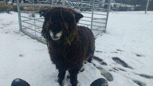 Ymogen in the snow 10 days