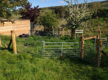 New Sheep Handling Area