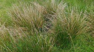 Ymogen hiding in the grass