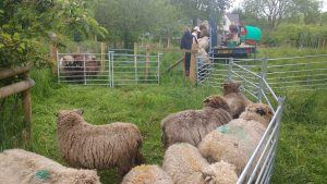 shearing underway looking on