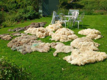Wool Glorious Wool