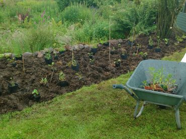 Flower bed cleared and replanted