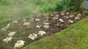 flower bed woolly protection