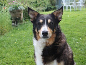 Haribo Wins Top Dog Award