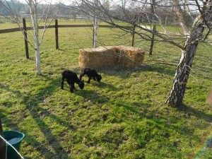 Larry and Lisa explore their new outdoor pen
