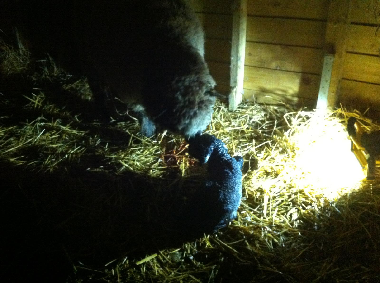 Bluemli and Wart just born