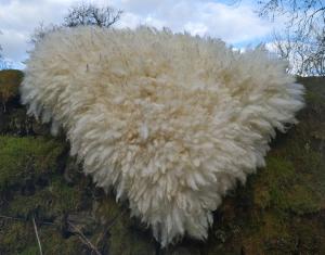 felted fleece rug - Border Leicester
