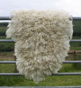 felted fleece rug - Cheviot hog