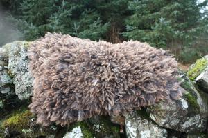 felted fleece rug - Coloured Ryeland - Ursi