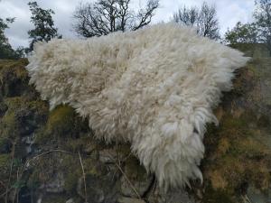 felted fleece rug - Texel x Herdwick