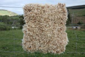 The Yogi rug (Coloured Ryeland hog)
