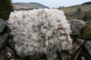felted fleece rug - Coloured Ryeland hog - Yssi