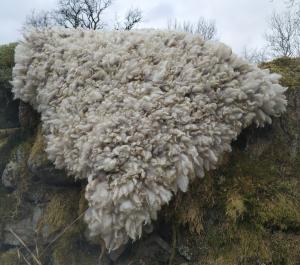 felted fleece rug - Coloured Ryeland