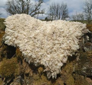 felted fleece rug-Coloured Ryeland-mixture of fleeces