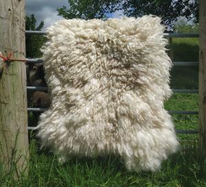 felted fleece rug - Mule hog -