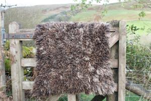 felted fleece rug - Coloured Ryeland hog - Yumbo
