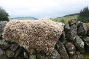 felted fleece rug - Coloured Ryeland hog - Witchy