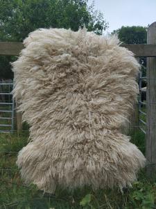 sheep friendly sheepskin - Scotch Mule hog