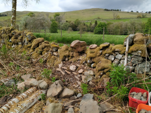 stone dyke by track - start (May 2021)