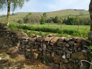 stone dyke by track 3 in progress