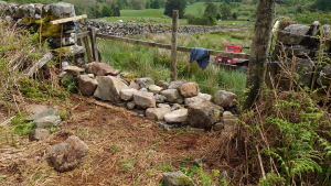 Stone dyke - filling a gap day 2