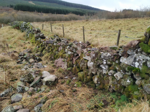 Paddock stone dyke - all leaning stones taken down and base made level