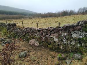 Paddock stone dyke - rebuild well underway