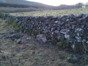 Paddock stone dyke - repairs complete